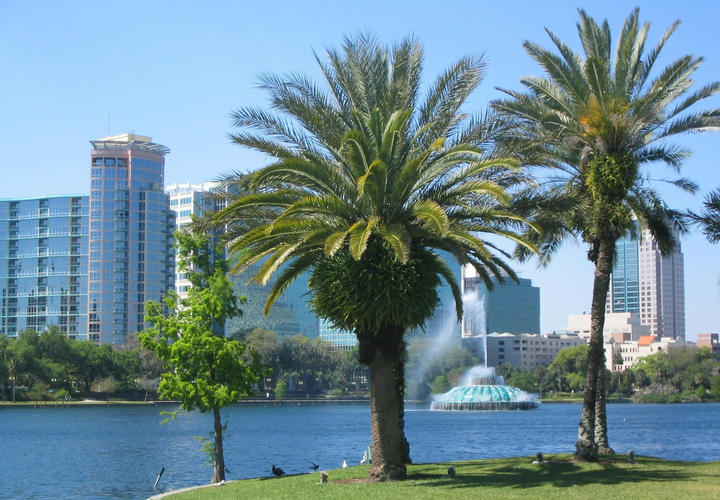 Palm trees with Orlando in the background